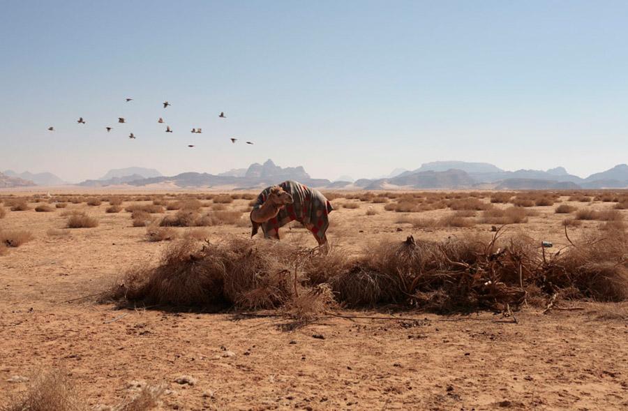 février 2008 - Village de al-Rashidya, près de Wadi Ram. Jordanie
