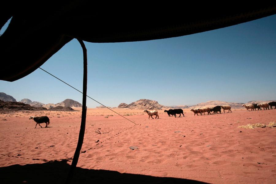 Bedouins06
