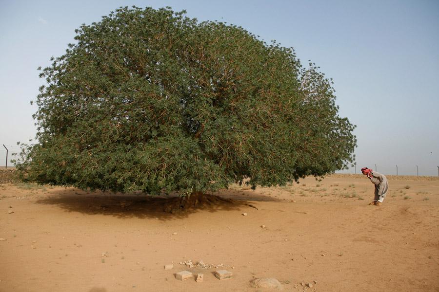 Bedouins17